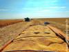 No estado, 70% do milho 2ª safra já foi colhido, segundo Aprosoja/MS