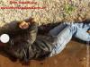 Maracaju: Homem foi assassinado com golpes de faca no pescoço, nas costas e rosto