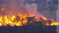 VÍDEO: bombeiros de 4 cidades combatem incêndio em parque estadual de MS