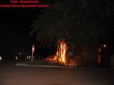Maracaju: Figueira na entrada de Maracaju pega fogo