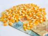 Preço do milho sobe 12,84% em Mato Grosso do Sul