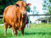 Programa Montana e Montana Calidad promovem dia de campo sobre seleção genética para melhores carcaças bovinas, consumo individual e produção de carne premium