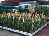 Monitoramento digital desenvolvido pela BAYER é destaque na feira do agronegócio em Maracaju