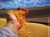 Aprosoja divulga expectativa para a safrinha e fecha ciclo da soja em MS