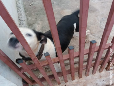 Maracaju: Cachorro apareceu em residência. Proprietários devem procurar os moradores para buscarem o animal