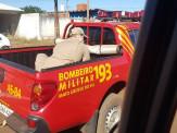 Maracaju: Bombeiros capturam Ema na região Central de Maracaju