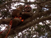 Maracaju: Bombeiros resgatam gato que estava preso em topo de árvore