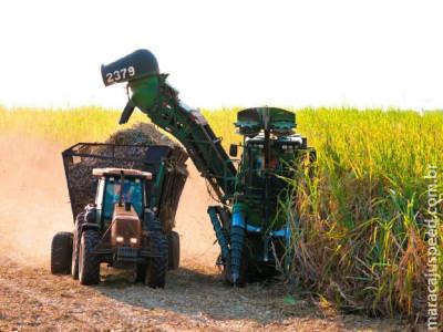 Moagem de cana-de-açúcar atinge 28,9 milhões de toneladas em MS