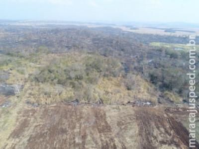 Fazendeiro é multado em R$ 224 mil por desmatamento e incêndio