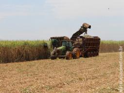Cana-de-açúcar: moagem atinge 44 milhões de toneladas em MS