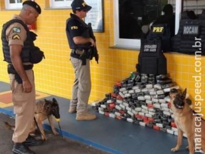 Carga de cocaína que saiu de Dourados é farejada por cães e apreendida