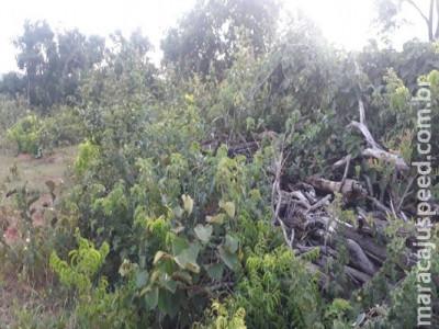 Homem é multado em R$ 25 mil por derrubar vegetação de cerrado