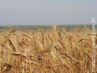 Preços mínimos da laranja, trigo e arroz são reajustados