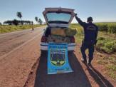 Em ocorrências simultâneas no mesmo local Polícia Militar Rodoviária apreende mais de 860 kg de drogas em Maracaju