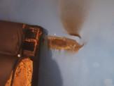 Maracaju: Bombeiros atendem ocorrência de incêndio em residência no Conjunto Olídia Rocha