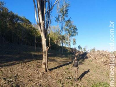 Idoso leva multa por desmatamento ilegal em área protegida