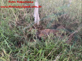 Maracaju: Corpo em avançado estado de decomposição é encontrado próximo a linha férrea no Conjunto Olídia Rocha