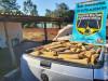 Maracaju: Polícia Militar Rodoviária recupera veículo roubado que transportava quase meia tonelada de drogas