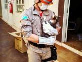 Bombeiros resgatam gatinha que estava presa em forro de comércio na região central de Maracaju