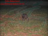 Animais silvestres são flagrados em área do centro e bairro de Maracaju