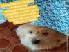 Maracaju utilidade pública: Procura-se animalzinho desaparecido