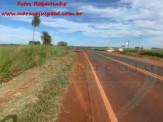 Maracaju: Bombeiros atendem ocorrência de capotamento na rodovia BR-267, após condutor atropelar animal silvestre
