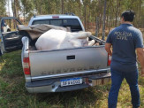 Polícia civil de Jardim prende suspeitos de comercializar carne ilegal