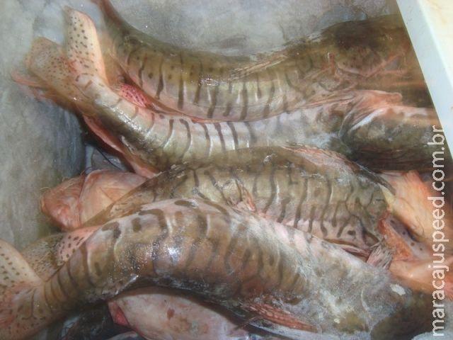 PM prende infrator com drogas e armas e PMA o prende por armazenamento de 64 kg de pescado ilegal