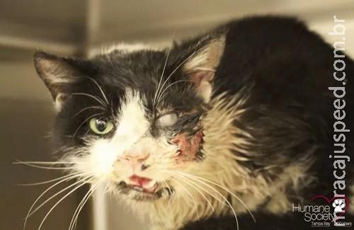 """Cinco dias após enterro, """"gato-zumbi"""" reaparece vivo"""