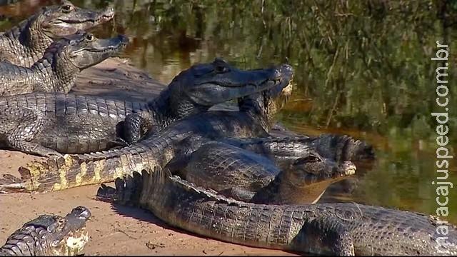 Pantanal é eleito o quarto melhor destino de viagem do mundo