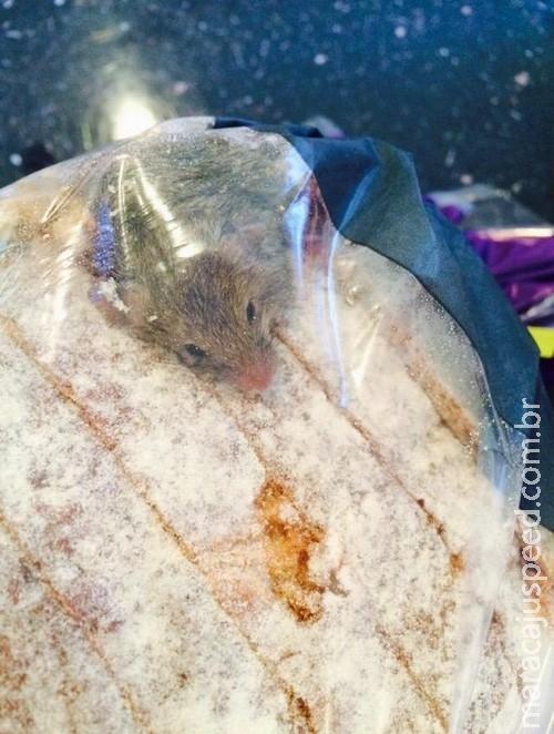 Cliente acha rato vivo dentro de saco de pão comprado em supermercado