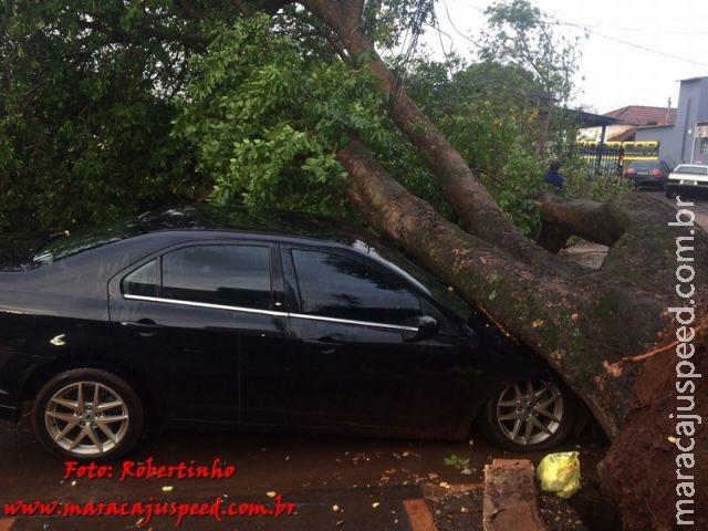Árvore cai em cima de dois veículos no centro de Maracaju