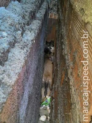 Cadela é resgatada após passar três dias presa entre paredes com 20 cm