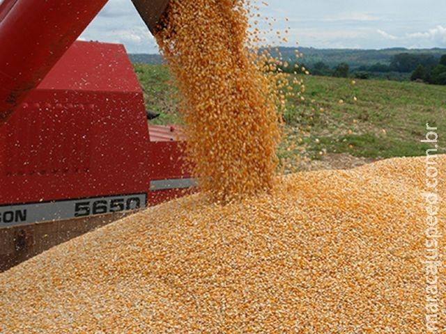 Economista analisa perspectivas de mercado para safra de milho