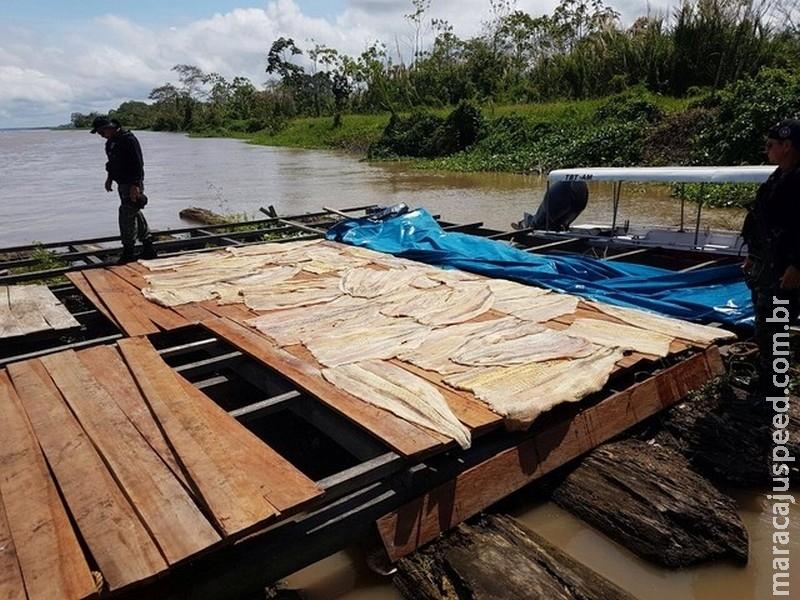 Polícia apreende 2 toneladas de pirarucu durante operação