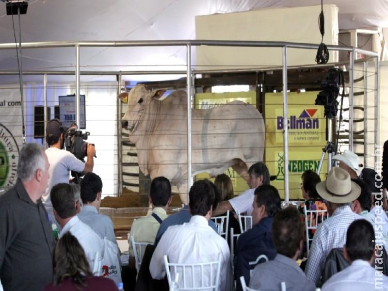 Aquidauana será palco da Megaloja de Touros CFM, em agosto