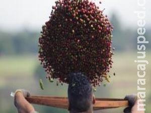 Queda de 27% no estoque de café pode levar a aumento no preço