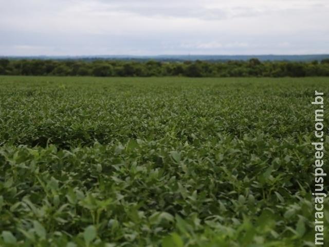 Projeção de aumento no consumo de soja deixa produtores otimistas