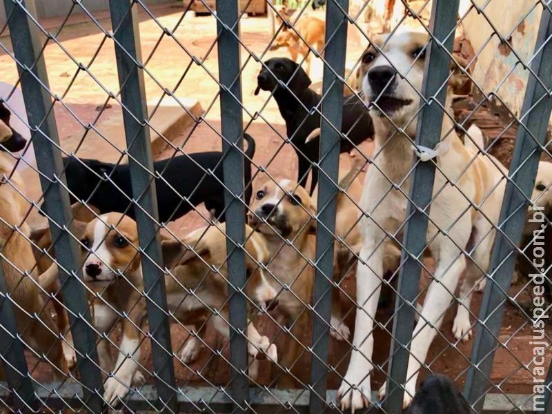 Aprovada lei que dispõe sobre a instituição da política do bem-estar animal em Maracaju