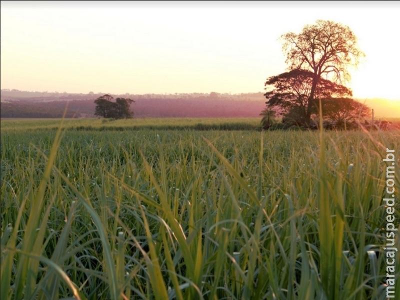 Produção de etanol ultrapassa 2 bilhões de litros em MS