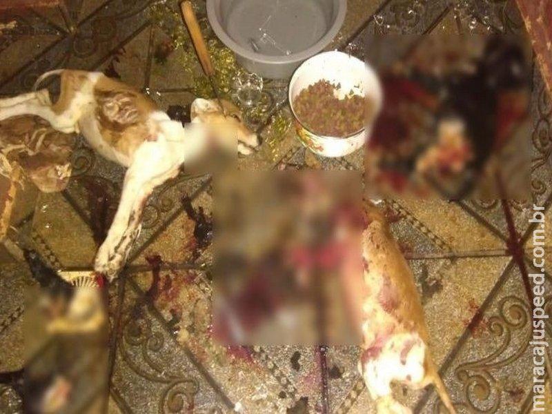 Em cena de filme de terror, cães são mutilados e assassinados a facada