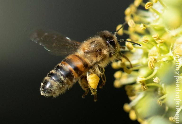 Estudo aponta declínio dos insetos no mundo