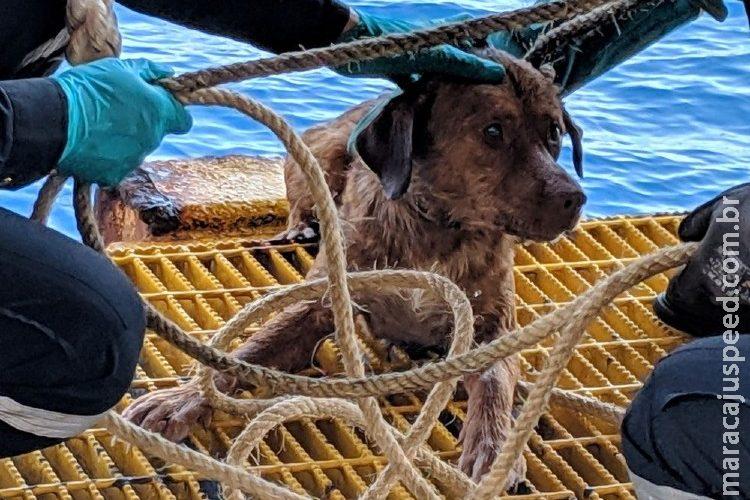 Cão perdido no mar é resgatado a 200 km da costa da Tailândia
