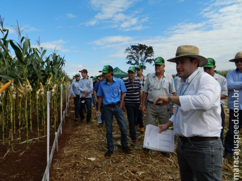 Dia de Campo em Maracaju apresenta 69 híbridos nesta quarta-feira (29)