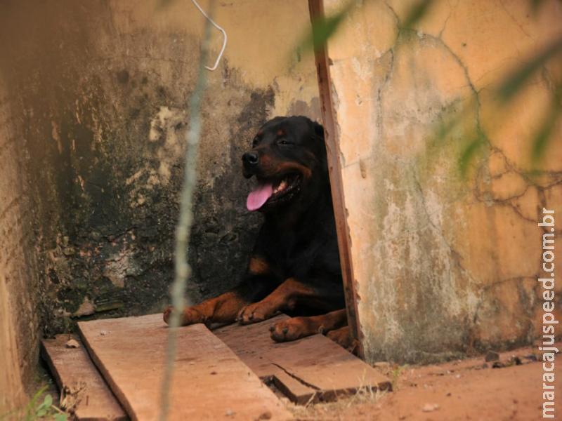 Idoso é atacado por dois cachorros rottweiler no quintal de casa