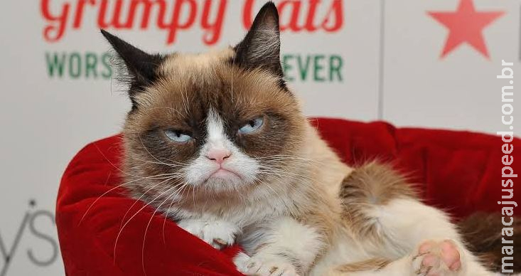 "Morre ""Grumpy Cat"", gata rabugenta que virou meme na internet"