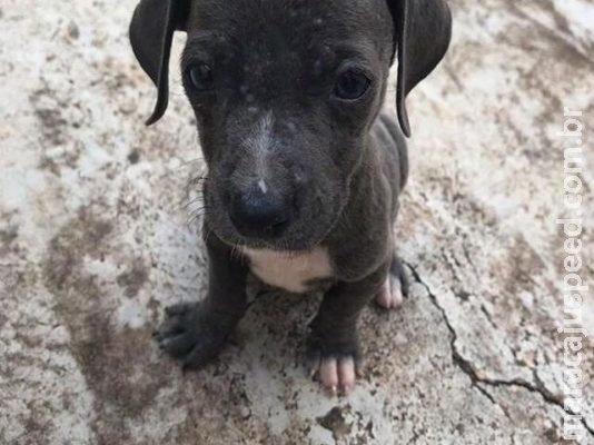 ONG realiza bazar beneficente em prol de animais resgatados