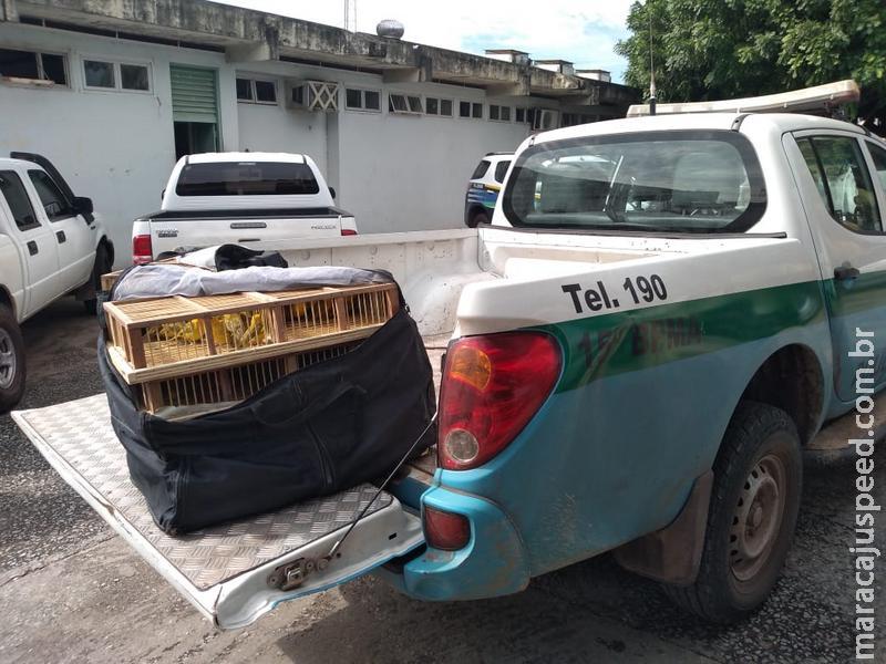 Polícia Militar Ambiental autua em R$ 34 mil uma comerciante de 33 anos por tráfico de 160 canários