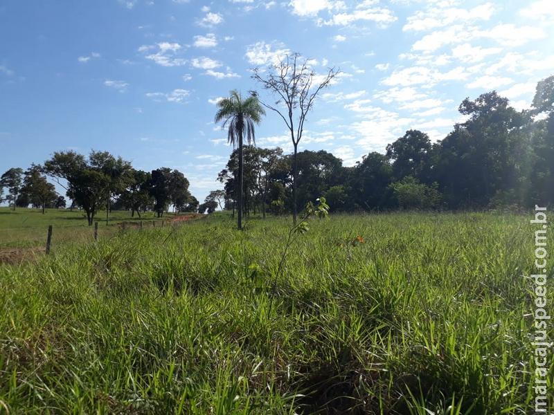 Polícia Militar Ambiental autua infrator em R$ 19,5 mil por desmatamento ilegal em área protegida de reserva legal
