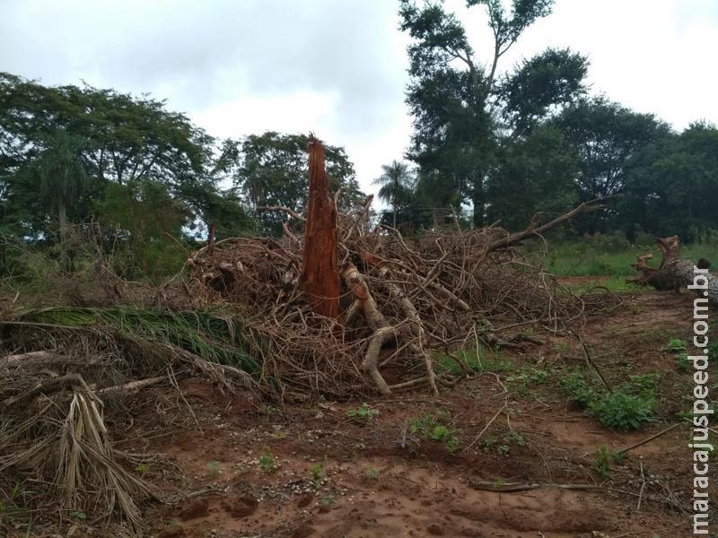 Polícia Militar Ambiental autua infrator em R$ 6,3 mil por desmatamento ilegal de 21 hectares de vegetação nativa